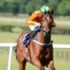 Ascot on the cards for Trippi grandson Image