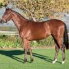 Smart debut winner for Trippi Image